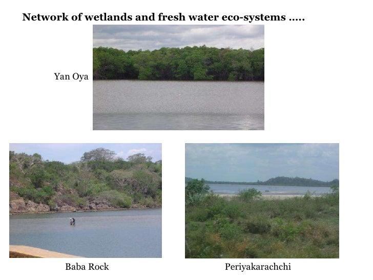 Network of wetlands and fresh water eco-systems ….. Yan Oya Baba Rock Periyakarachchi