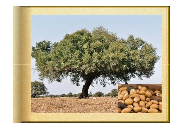 HUILE VEGETALE DE CAROTTEProcédé dobtention par macération dans de lhuile de tournesol.Dorigine France.Culture : Agricultu...