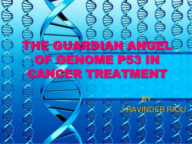 p53 guardian of genome Inhibition of tumor angiogenesis by p53: a new role for the guardian of the genome p53 as a tumor suppressor has come from studies in mice.