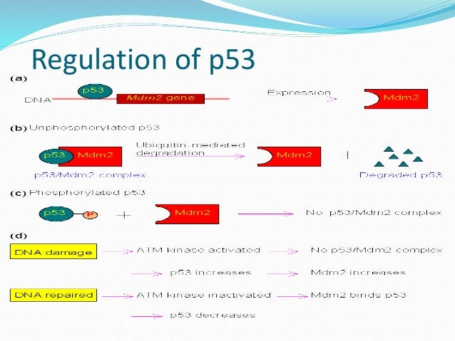 The p53 Gene and Cancer