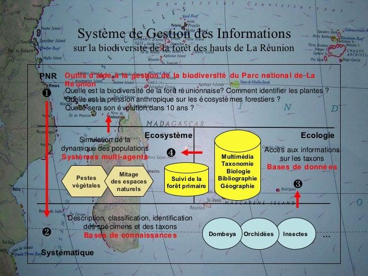 Insectes Systématique Description, classification, identification des spécimens et des taxons Bases de connaissances Outil...