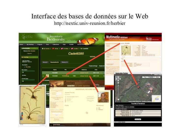 Interface des bases de données sur le Web http://nextic.univ-reunion.fr/herbier