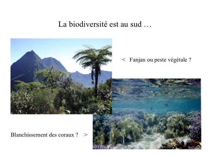 La biodiversité est au sud … <  Fanjan ou peste végétale ? Blanchissement des coraux ?  >