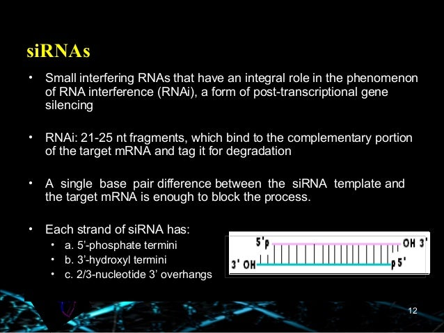 difference between template and coding strand - mirna sirna