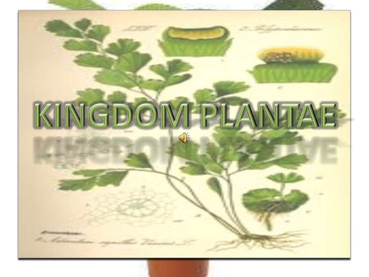 Presentation of Kingdom Plantae