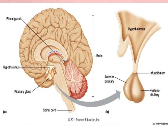 Presentation of menopause in gujarati 5 ccuart Images