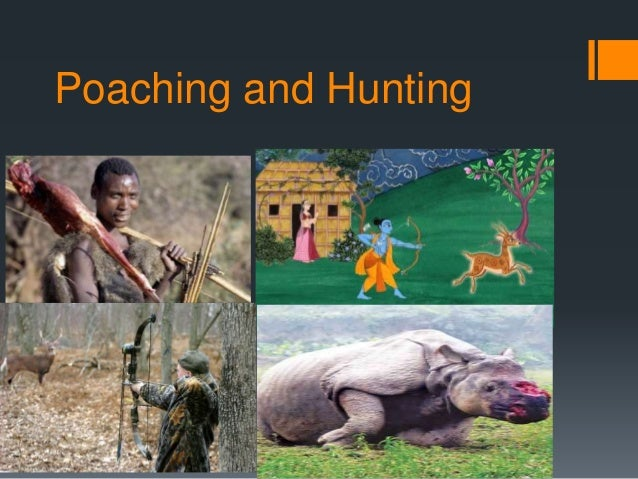 economic impact of deer and wildlife hunting essay Economic impact oregon's how important are hunting, fishing and wildlife viewing to oregon in 2008 alone find out how and where that money was spent at the oregon department of fish and wildlife's economic survey website.