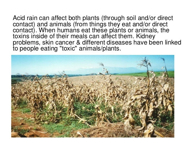 acid rain and its effects on environment Aimed to mitigate the problem and environmental issues, such as global warming , that have taken centerstage but acid deposition continues to affect ecological.