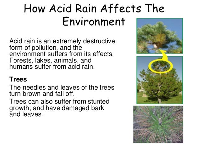 the effects of acid rain on the environment