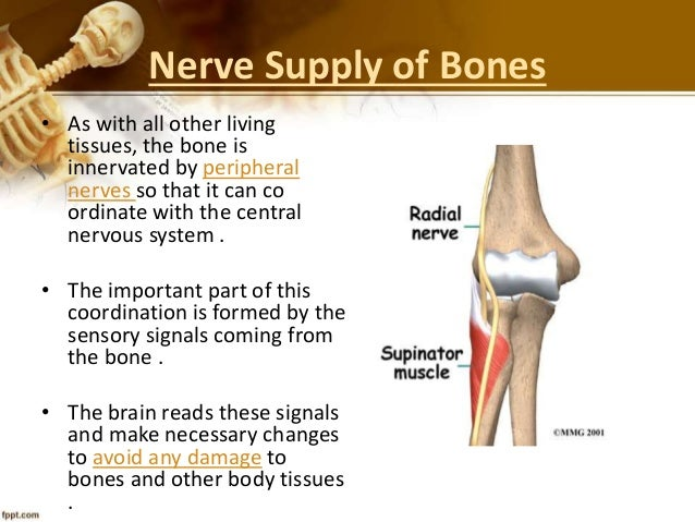 Presentation on bones