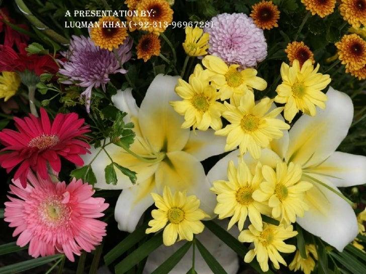 Presentation On Flowers
