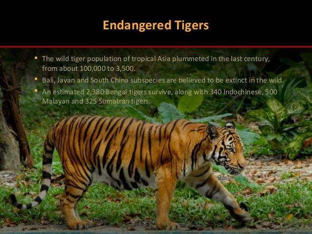 Habitat Threats for Tigers