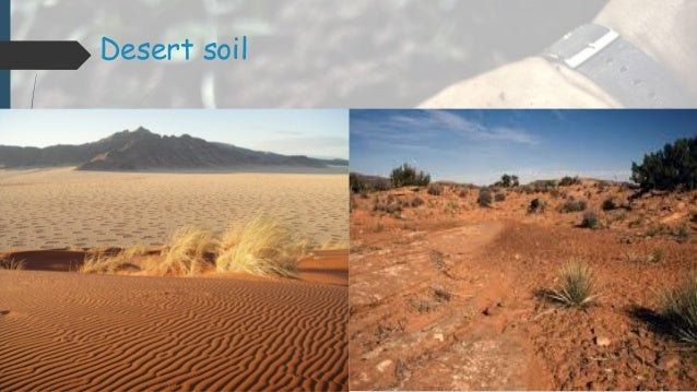 Presentation on soil of south asia