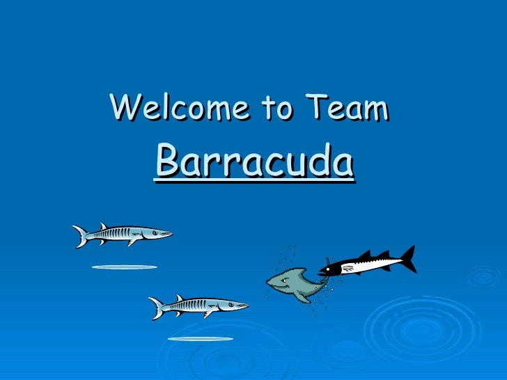 Welcome to Team  Barracuda