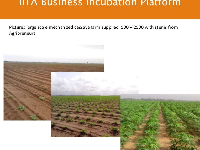 fish farming business plan in nigeria the outside wife