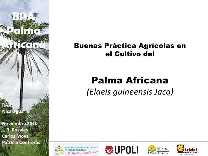 Presentation Palma Africana