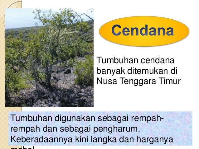 Usaha pelestarian hewan dan  tumbuhan dapat dilakukan melalui :Pelestarian eks Situpelestarian yang dilakukan diluar tempa...
