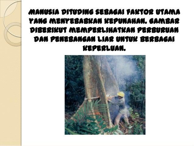 Adakah yang pernah                       melihat orangutan?Orangutan hidup di hutan-hutan yang terdapat diPulauSumatra dan...