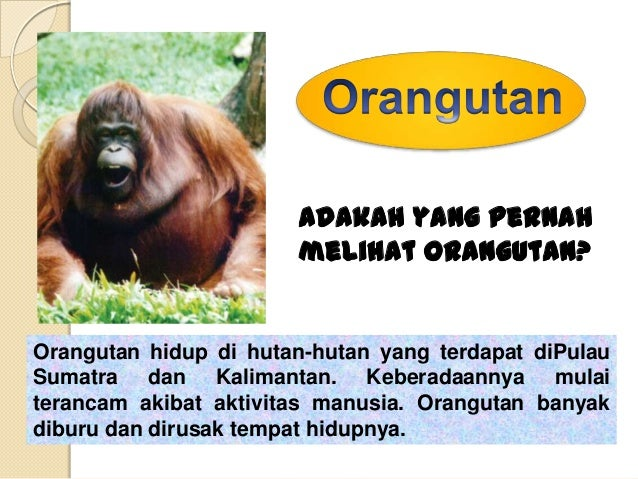 Anoa merupakan                    binatang khas                    dari Pulau                    Sulawesi.Hewan tersebut h...