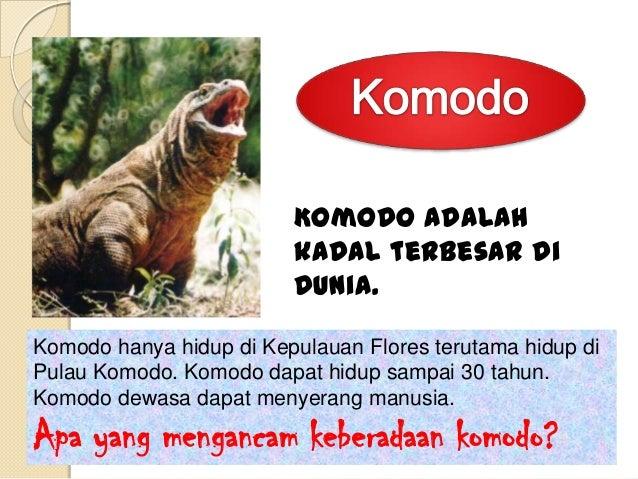 Harimau Sumatra terus                     diburu karena meningkatnya                          permintaan bagian           ...