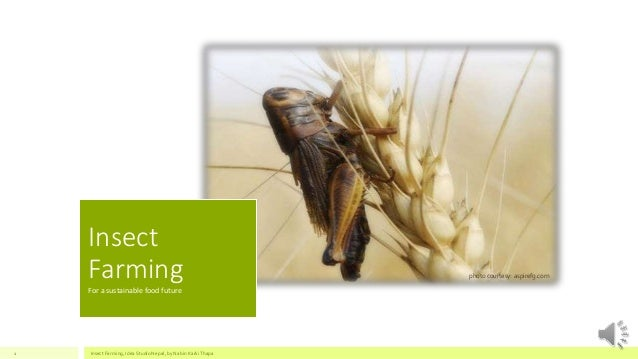 Insect  Farming  For a sustainable food future  photo courtesy: aspirefg.com  Insect Farming, Idea Studio Nepal, 1 by Nabi...