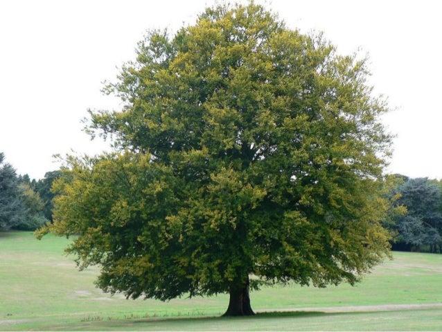 References•   http://tankforlife.files.wordpress.com/2010/02/tree.jpg•   http://autokeylocksmithin.com/House,rekey,lock,au...