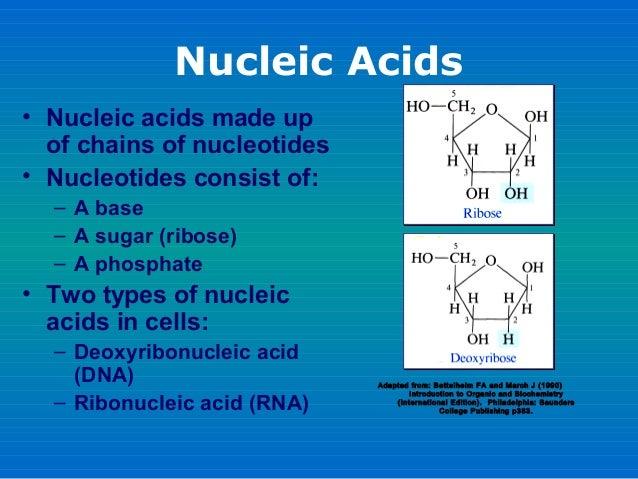 Presentation Protein Synthesis Slide 3