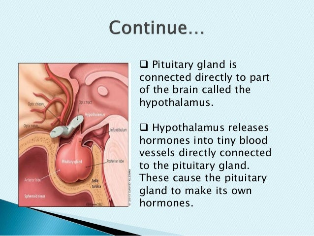 presentation on pituitary gland tumor, Cephalic Vein