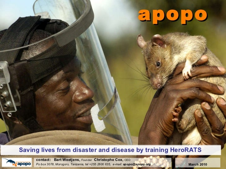 apopo Saving lives from disaster and disease by training HeroRATS c ontact:  Bart Weetjens,  Founder  Christophe Cox,  CEO...