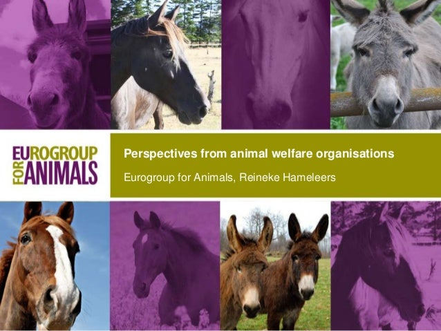 Eurogroup for Animals, Reineke Hameleers Perspectives from animal welfare organisations