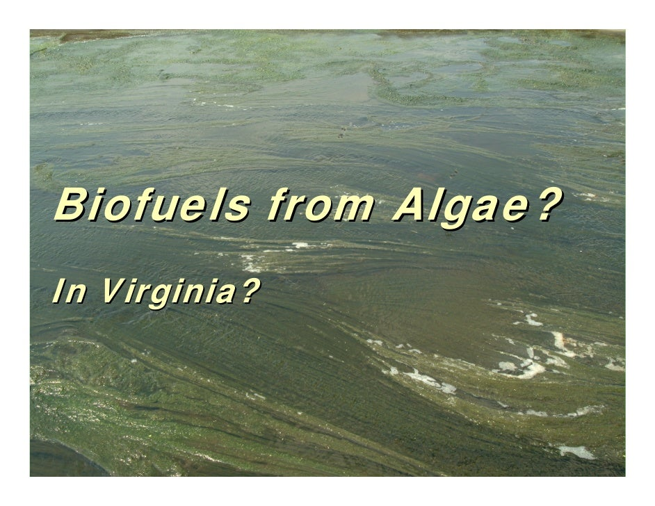 Biofuels from Algae? In Virginia?