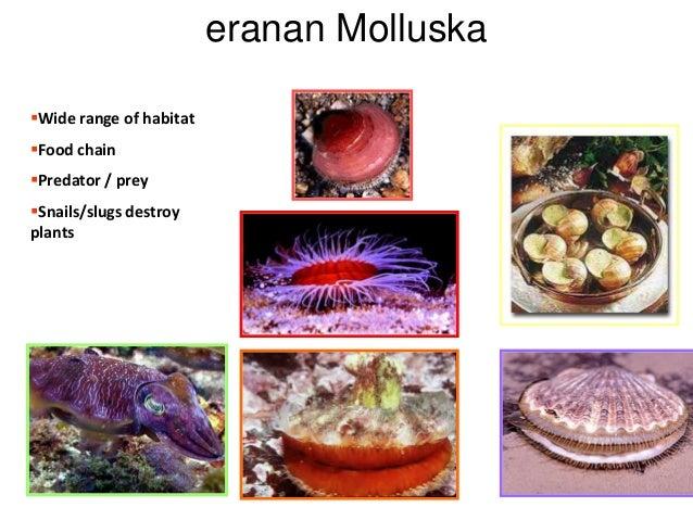 eranan Molluska Wide range of habitat Food chain  Predator / prey Snails/slugs destroy plants