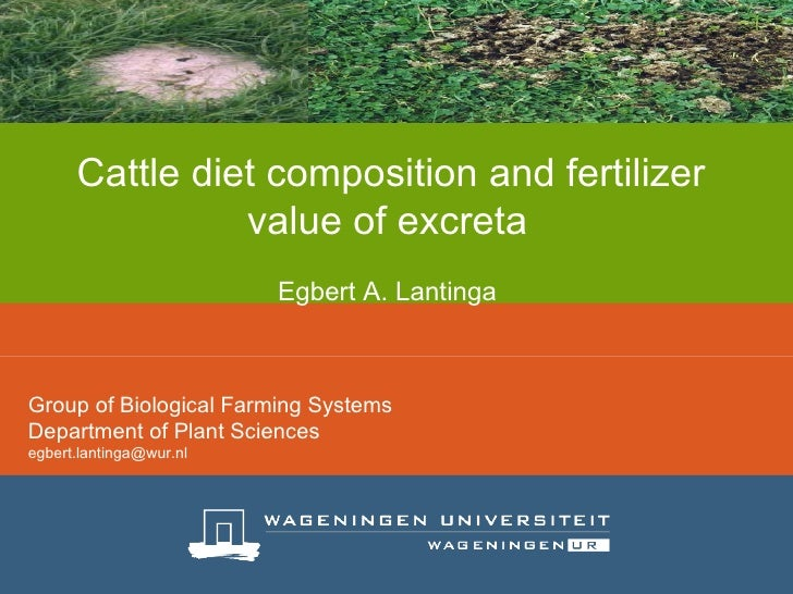 Cattle diet composition and fertilizer value of excreta     Egbert A. Lantinga   Group of Biological Farming Systems Depar...