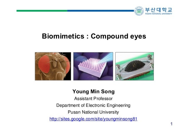 Biomimetics : Compound eyes  Young Min Song Assistant Professor Department of Electronic Engineering Pusan National Univer...