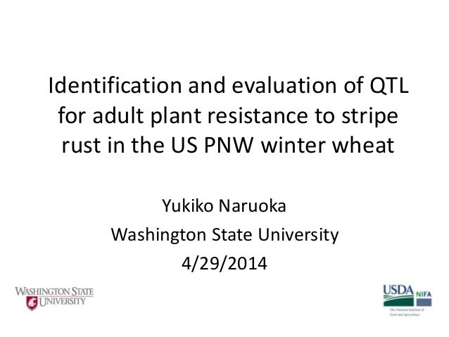 Identification and evaluation of QTL for adult plant resistance to stripe rust in the US PNW winter wheat Yukiko Naruoka W...