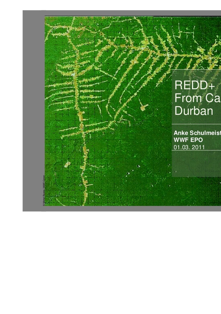 REDD+                             From Cancun to                             Durban                             Anke Schul...