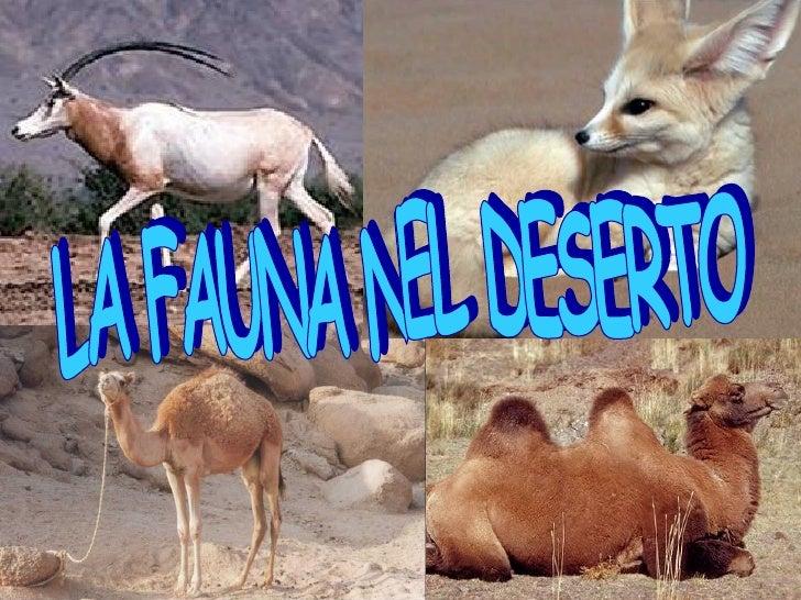 LA FAUNA NEL DESERTO