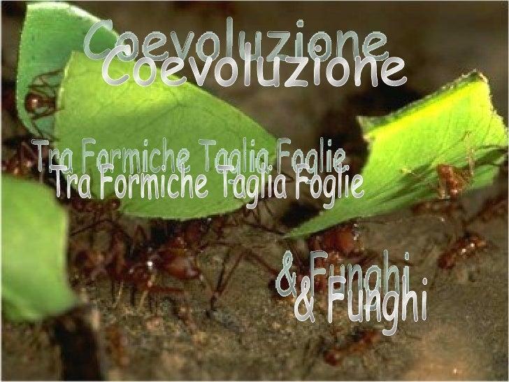 Coevoluzione  Tra Formiche Taglia Foglie & Funghi