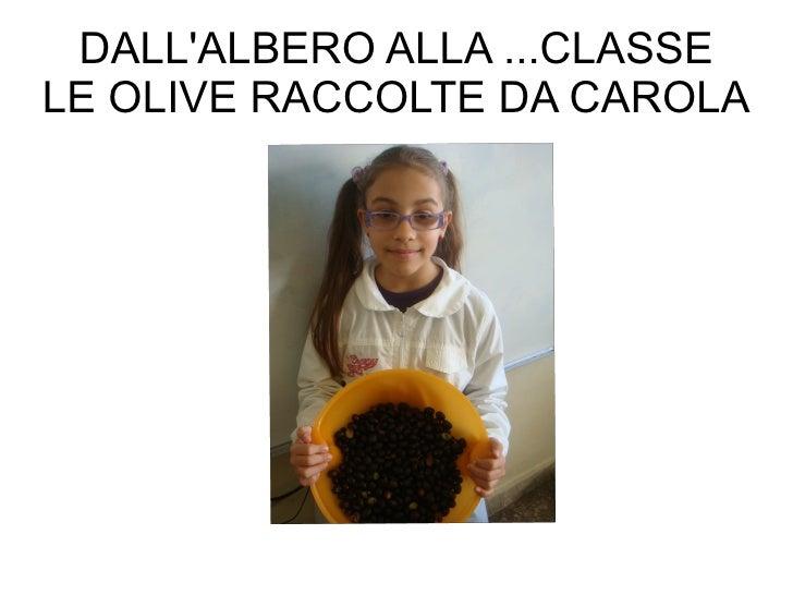 DALL'ALBERO ALLA ...CLASSE LE OLIVE RACCOLTE DA CAROLA