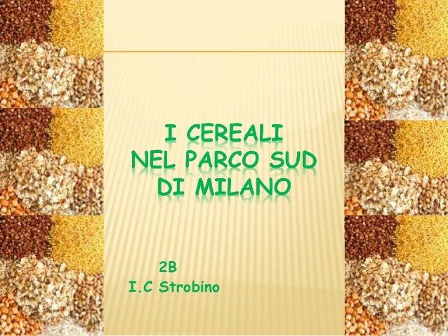 2B I.C Strobino