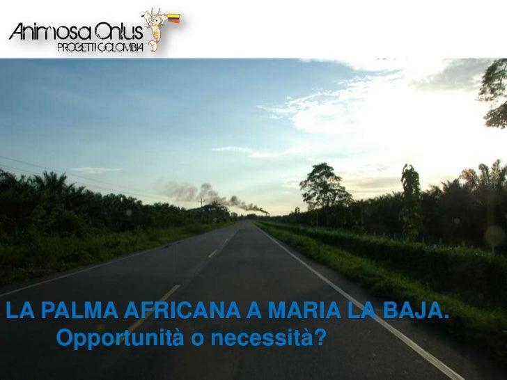 LA PALMA AFRICANA A MARIA LA BAJA. Opportunità o necessità?<br />