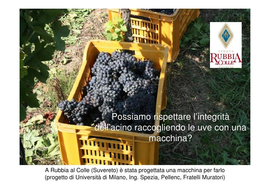 Risultati immagini per Raccogliere l'uva