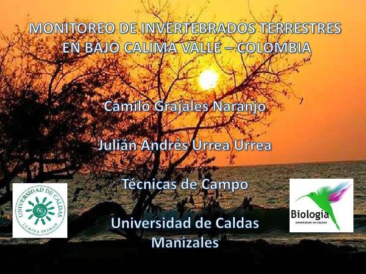 MONITOREO DE INVERTEBRADOS TERRESTRES<br /> EN BAJO CALIMA VALLE – COLOMBIA<br />Camilo Grajales Naranjo<br />Julián André...