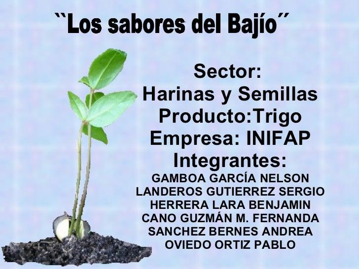 Sector:  Harinas y Semillas Producto:Trigo Empresa: INIFAP Integrantes: GAMBOA GARCÍA NELSON LANDEROS GUTIERREZ SERGIO HER...