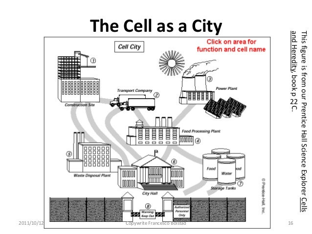 Cell City Answer Key Diagram | Wiring Diagram