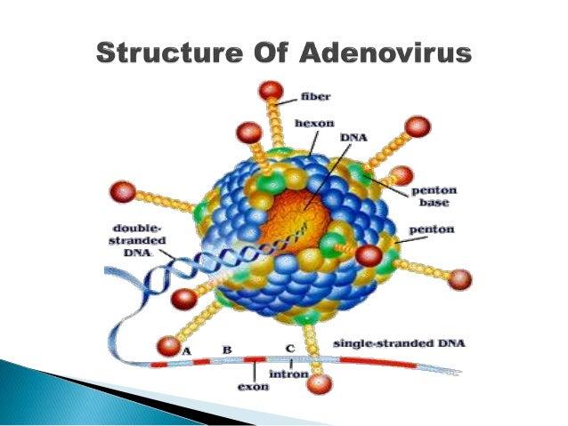 viral encephalitis steroids