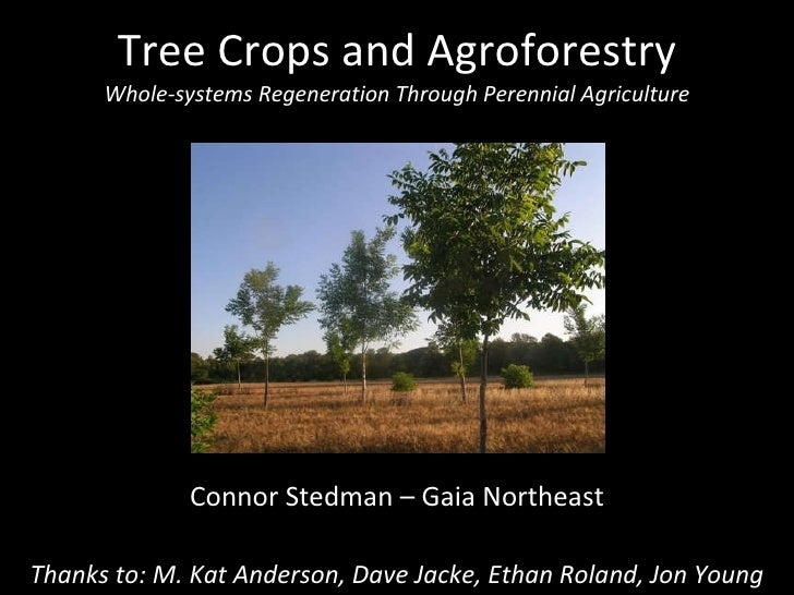 Tree Crops and Agroforestry Whole-systems Regeneration Through Perennial Agriculture Connor Stedman – Gaia Northeast Thank...