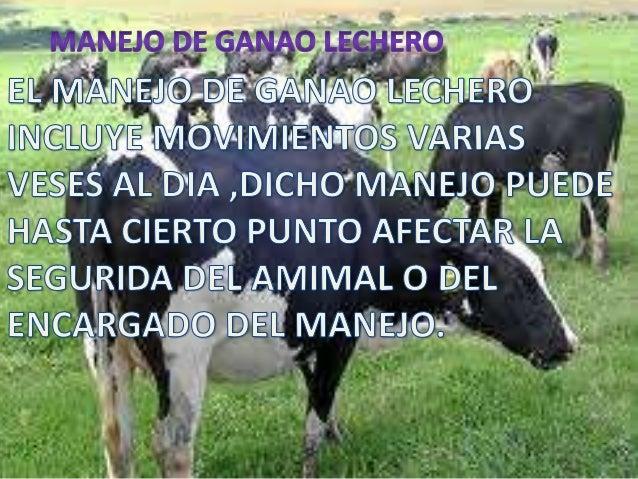 MANEJO DE GANADO DE ORDEÑO