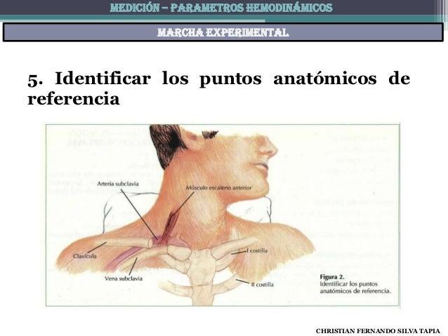 MEDICIÓN – PARAMETROS HEMODINÁMICOS               Marcha experimental5. Identificar los puntos anatómicos dereferencia    ...