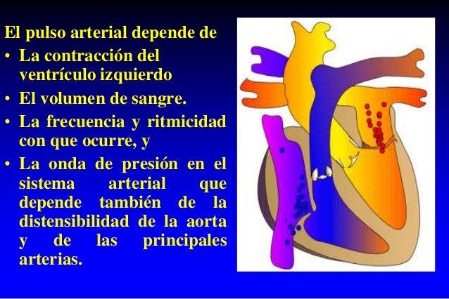 El pulso arterial depende de • La contracción del ventrículo izquierdo • El volumen de sangre. • La frecuencia y ritmicida...